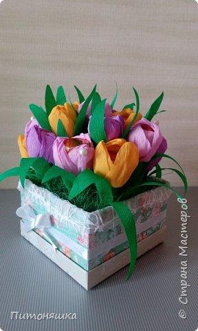 Тюльпаны фото 2