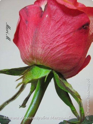 Роза сделана из зефирного фоамирана, стебель - из глины.  фото 4