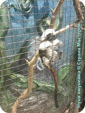 Мой фоторепортаж начинается с черепашек. Я очень удивилась но тут они быстрее двигаются. фото 8