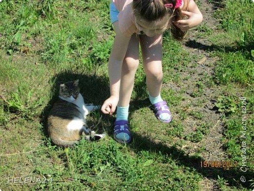Сегодня хочу познакомить вас с моими животными.Вот это Алиса  фото 10
