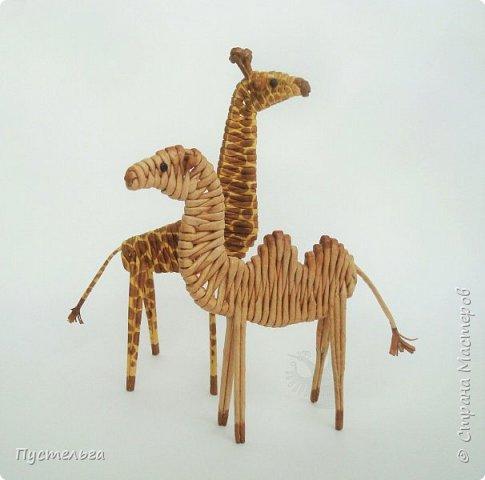 Лето, жара! Сплетём-ка мы жирафа! И ещё верблюда. фото 1