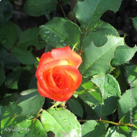Летний дождь... Короткий и освежающий... фото 2