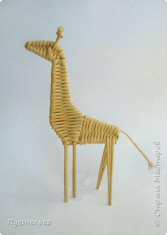 Лето, жара! Сплетём-ка мы жирафа! И ещё верблюда. фото 19