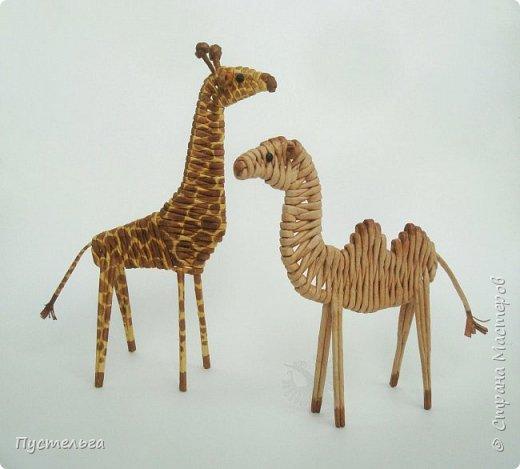 Лето, жара! Сплетём-ка мы жирафа! И ещё верблюда. фото 24