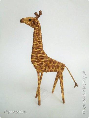 Лето, жара! Сплетём-ка мы жирафа! И ещё верблюда. фото 20