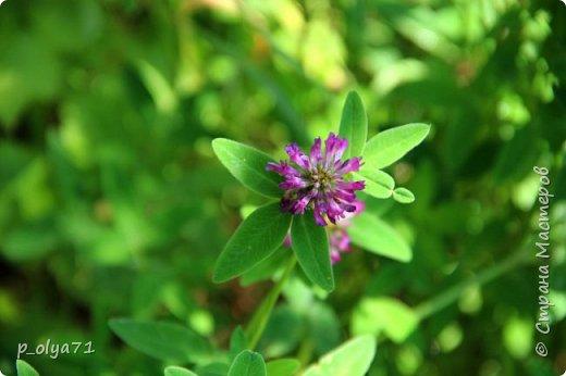 Здравствуйте!! Продолжаю фотографировать цветочки,радующие своей красотой и делиться с вами!  фото 40