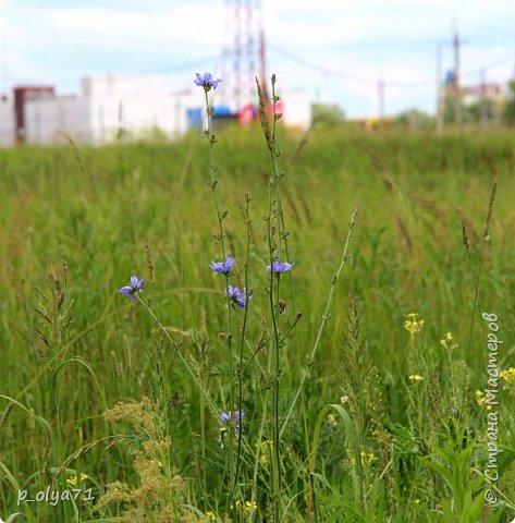 Здравствуйте!! Продолжаю фотографировать цветочки,радующие своей красотой и делиться с вами!  фото 58