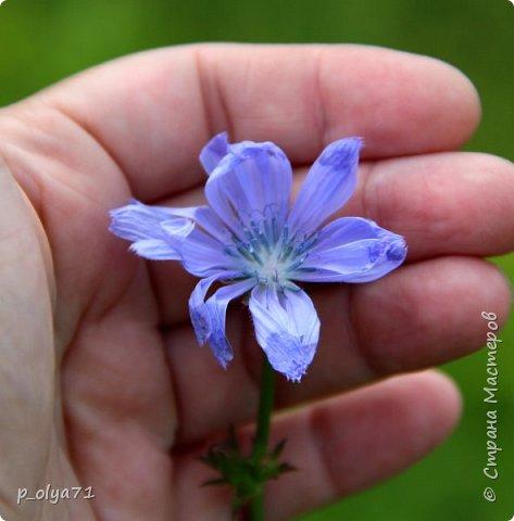 Здравствуйте!! Продолжаю фотографировать цветочки,радующие своей красотой и делиться с вами!  фото 60
