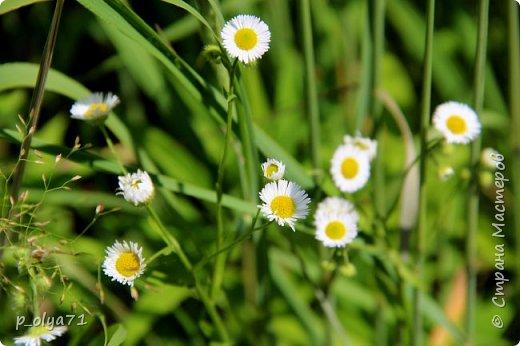 Здравствуйте!! Продолжаю фотографировать цветочки,радующие своей красотой и делиться с вами!  фото 54