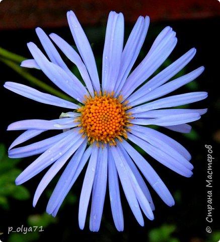 Здравствуйте!! Продолжаю фотографировать цветочки,радующие своей красотой и делиться с вами!  фото 70