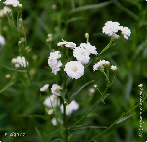 Здравствуйте!! Продолжаю фотографировать цветочки,радующие своей красотой и делиться с вами!  фото 85