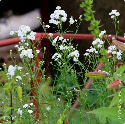 Здравствуйте!! Продолжаю фотографировать цветочки,радующие своей красотой и делиться с вами!  фото 84