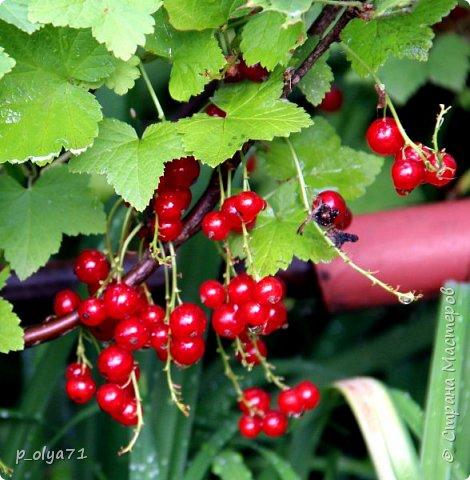 Здравствуйте!! Продолжаю фотографировать цветочки,радующие своей красотой и делиться с вами!  фото 95