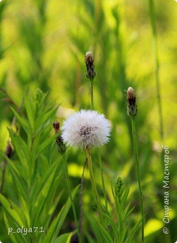 Здравствуйте!! Продолжаю фотографировать цветочки,радующие своей красотой и делиться с вами!  фото 106