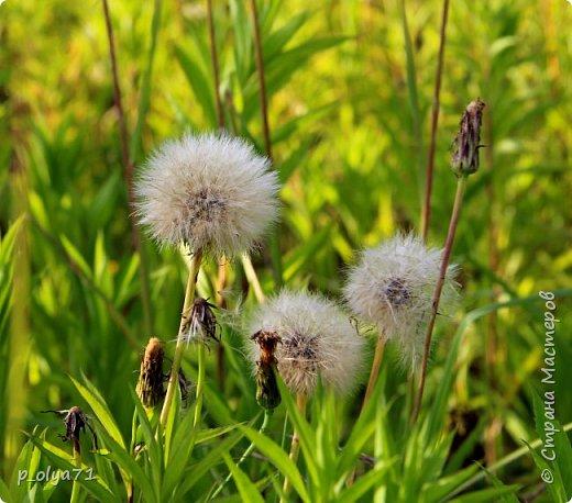 Здравствуйте!! Продолжаю фотографировать цветочки,радующие своей красотой и делиться с вами!  фото 107