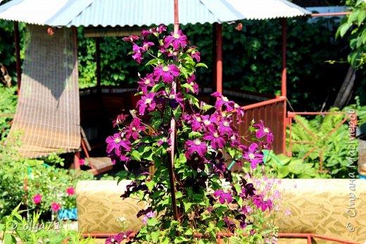 Здравствуйте!! Продолжаю фотографировать цветочки,радующие своей красотой и делиться с вами!  фото 15