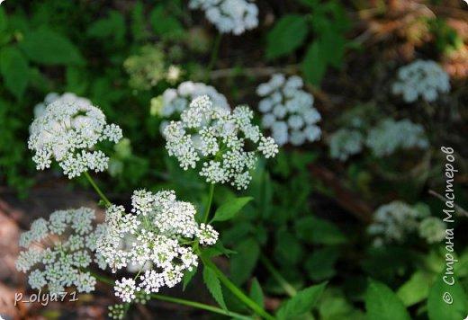Здравствуйте!! Продолжаю фотографировать цветочки,радующие своей красотой и делиться с вами!  фото 23
