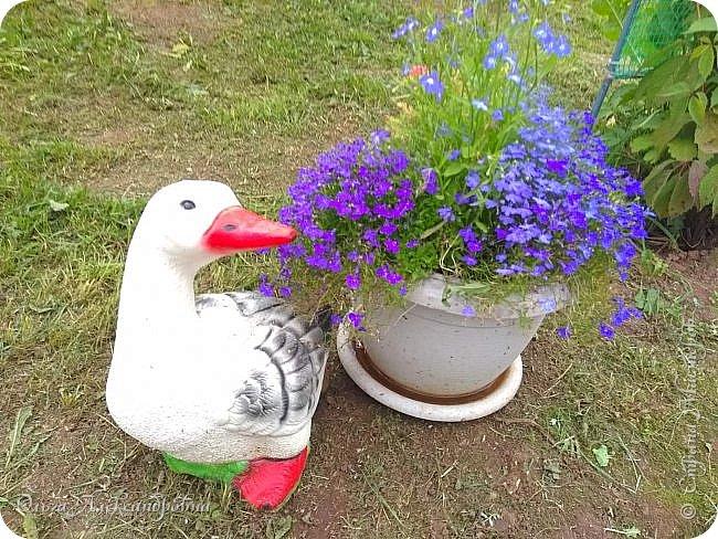 Здравствуйте, здравствуйте, дорогие друзья и гости моей странички! Давненько я здесь не была. Муза творчества меня покинула на неопределенный срок, зато муза огородно-садовая рвет и мечет.  Хочу показать в сегодняшнем фоторепортаже наши с мужем дела в саду-огороде. Это цветочное оформление на террасе. На самой террасе работы много, но...  фото 11