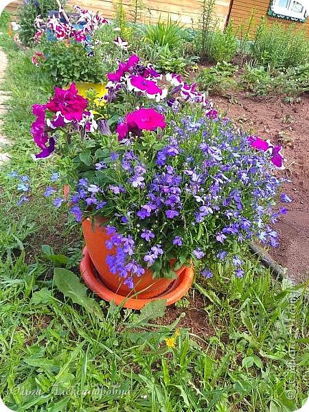 Здравствуйте, здравствуйте, дорогие друзья и гости моей странички! Давненько я здесь не была. Муза творчества меня покинула на неопределенный срок, зато муза огородно-садовая рвет и мечет.  Хочу показать в сегодняшнем фоторепортаже наши с мужем дела в саду-огороде. Это цветочное оформление на террасе. На самой террасе работы много, но...  фото 13