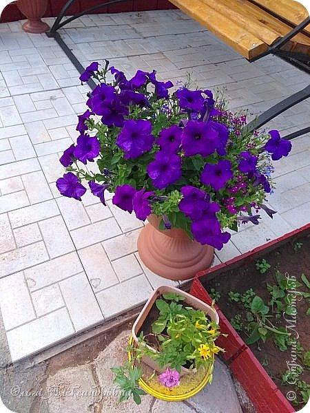 Здравствуйте, здравствуйте, дорогие друзья и гости моей странички! Давненько я здесь не была. Муза творчества меня покинула на неопределенный срок, зато муза огородно-садовая рвет и мечет.  Хочу показать в сегодняшнем фоторепортаже наши с мужем дела в саду-огороде. Это цветочное оформление на террасе. На самой террасе работы много, но...  фото 14