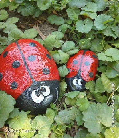 Приветствую, дорогие соседи!Продолжаю украшать свой участок,на этот раз фигурками из фанеры и расписными камнями.Вот такие курочки бегают теперь у меня в саду. фото 6