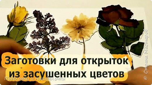Сухоцветы. Заготовки для подарков и открыток.