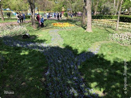 Здравствуйте, дорогие соседи!  Уже и середина лета. А я вот хочу вам напомнить о весне. Весна-цветы-тюльпаны. Это, наверное, у многих так воспринимается. Эти фото сделаны в Кировоградском городском дендропарке (нынче г.Кропивницкий, Украина). Немножко опоздали. Пик цветения был на недельку раньше. А всё же красиво! Идём гулять по аллеям парка.    фото 20