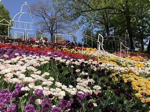 Здравствуйте, дорогие соседи!  Уже и середина лета. А я вот хочу вам напомнить о весне. Весна-цветы-тюльпаны. Это, наверное, у многих так воспринимается. Эти фото сделаны в Кировоградском городском дендропарке (нынче г.Кропивницкий, Украина). Немножко опоздали. Пик цветения был на недельку раньше. А всё же красиво! Идём гулять по аллеям парка.    фото 50