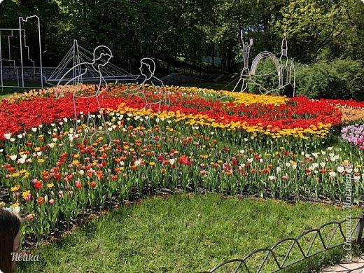 Здравствуйте, дорогие соседи!  Уже и середина лета. А я вот хочу вам напомнить о весне. Весна-цветы-тюльпаны. Это, наверное, у многих так воспринимается. Эти фото сделаны в Кировоградском городском дендропарке (нынче г.Кропивницкий, Украина). Немножко опоздали. Пик цветения был на недельку раньше. А всё же красиво! Идём гулять по аллеям парка.    фото 58