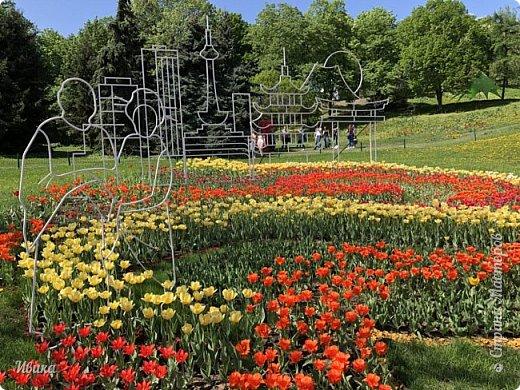 Здравствуйте, дорогие соседи!  Уже и середина лета. А я вот хочу вам напомнить о весне. Весна-цветы-тюльпаны. Это, наверное, у многих так воспринимается. Эти фото сделаны в Кировоградском городском дендропарке (нынче г.Кропивницкий, Украина). Немножко опоздали. Пик цветения был на недельку раньше. А всё же красиво! Идём гулять по аллеям парка.    фото 60