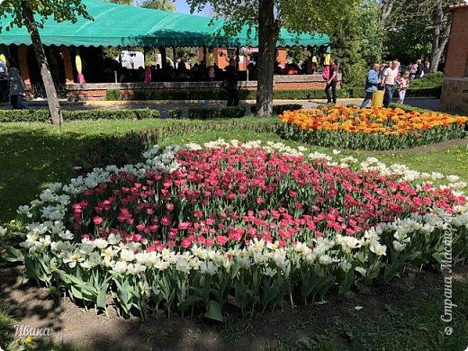 Здравствуйте, дорогие соседи!  Уже и середина лета. А я вот хочу вам напомнить о весне. Весна-цветы-тюльпаны. Это, наверное, у многих так воспринимается. Эти фото сделаны в Кировоградском городском дендропарке (нынче г.Кропивницкий, Украина). Немножко опоздали. Пик цветения был на недельку раньше. А всё же красиво! Идём гулять по аллеям парка.    фото 13