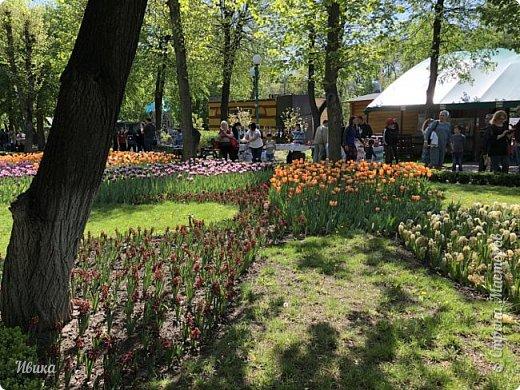 Здравствуйте, дорогие соседи!  Уже и середина лета. А я вот хочу вам напомнить о весне. Весна-цветы-тюльпаны. Это, наверное, у многих так воспринимается. Эти фото сделаны в Кировоградском городском дендропарке (нынче г.Кропивницкий, Украина). Немножко опоздали. Пик цветения был на недельку раньше. А всё же красиво! Идём гулять по аллеям парка.    фото 19