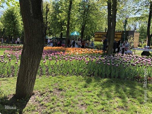 Здравствуйте, дорогие соседи!  Уже и середина лета. А я вот хочу вам напомнить о весне. Весна-цветы-тюльпаны. Это, наверное, у многих так воспринимается. Эти фото сделаны в Кировоградском городском дендропарке (нынче г.Кропивницкий, Украина). Немножко опоздали. Пик цветения был на недельку раньше. А всё же красиво! Идём гулять по аллеям парка.    фото 37