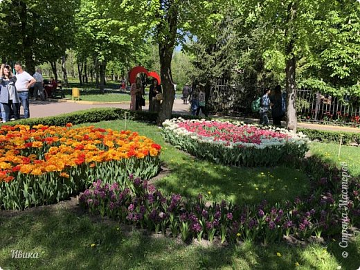 Здравствуйте, дорогие соседи!  Уже и середина лета. А я вот хочу вам напомнить о весне. Весна-цветы-тюльпаны. Это, наверное, у многих так воспринимается. Эти фото сделаны в Кировоградском городском дендропарке (нынче г.Кропивницкий, Украина). Немножко опоздали. Пик цветения был на недельку раньше. А всё же красиво! Идём гулять по аллеям парка.    фото 12