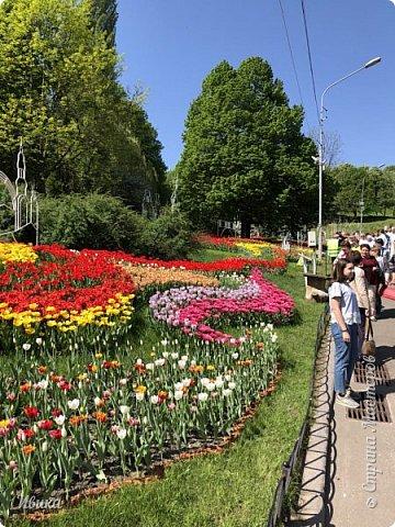 Здравствуйте, дорогие соседи!  Уже и середина лета. А я вот хочу вам напомнить о весне. Весна-цветы-тюльпаны. Это, наверное, у многих так воспринимается. Эти фото сделаны в Кировоградском городском дендропарке (нынче г.Кропивницкий, Украина). Немножко опоздали. Пик цветения был на недельку раньше. А всё же красиво! Идём гулять по аллеям парка.    фото 56