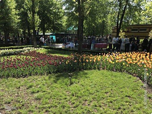 Здравствуйте, дорогие соседи!  Уже и середина лета. А я вот хочу вам напомнить о весне. Весна-цветы-тюльпаны. Это, наверное, у многих так воспринимается. Эти фото сделаны в Кировоградском городском дендропарке (нынче г.Кропивницкий, Украина). Немножко опоздали. Пик цветения был на недельку раньше. А всё же красиво! Идём гулять по аллеям парка.    фото 34