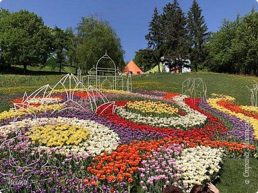 Здравствуйте, дорогие соседи!  Уже и середина лета. А я вот хочу вам напомнить о весне. Весна-цветы-тюльпаны. Это, наверное, у многих так воспринимается. Эти фото сделаны в Кировоградском городском дендропарке (нынче г.Кропивницкий, Украина). Немножко опоздали. Пик цветения был на недельку раньше. А всё же красиво! Идём гулять по аллеям парка.    фото 59