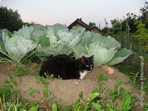 Здравствуйте ! Сегодня я с фоторепортажем об урожае прошлых лет  на даче. Обычный стандартный набор овощей и фруктов. Посмотрите сами: Охрана урожая фото 1