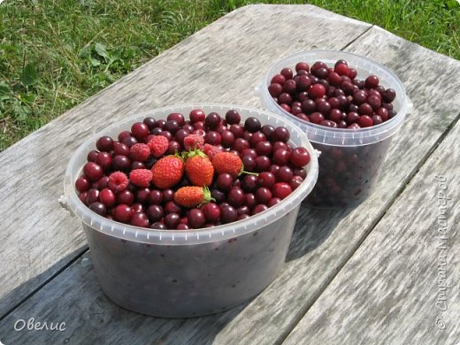 Здравствуйте ! Сегодня я с фоторепортажем об урожае прошлых лет  на даче. Обычный стандартный набор овощей и фруктов. Посмотрите сами: Охрана урожая фото 12
