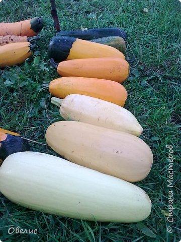 Здравствуйте ! Сегодня я с фоторепортажем об урожае прошлых лет  на даче. Обычный стандартный набор овощей и фруктов. Посмотрите сами: Охрана урожая фото 14