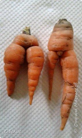Здравствуйте ! Сегодня я с фоторепортажем об урожае прошлых лет  на даче. Обычный стандартный набор овощей и фруктов. Посмотрите сами: Охрана урожая фото 10