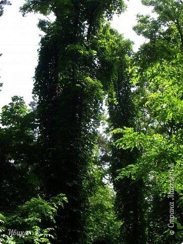 Здравствуйте, дорогие соседи!  Лето в самом разгаре! А какого цвета лето? У меня пара-тройка дней - зелёного! У кого очень жарко, приглашаю в тенистые аллеи парка г.Черкассы. У кого прохладно - погреться.  У меня уже были фото в этом парке. Кому интересно можно почитать и посмотреть вот тут https://stranamasterov.ru/node/1034869 и вот тут https://stranamasterov.ru/node/1035166.  фото 28