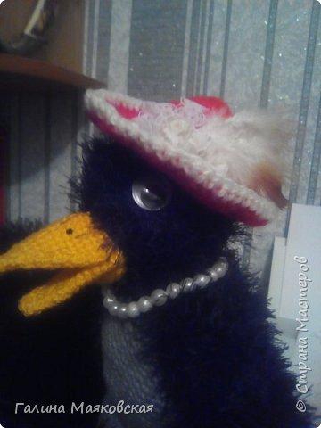 Привет всем! Сегодня хочу показать новых птичек.  Знакомьтесь : это  донна Клара. Очень хочет в отпуск. фото 2