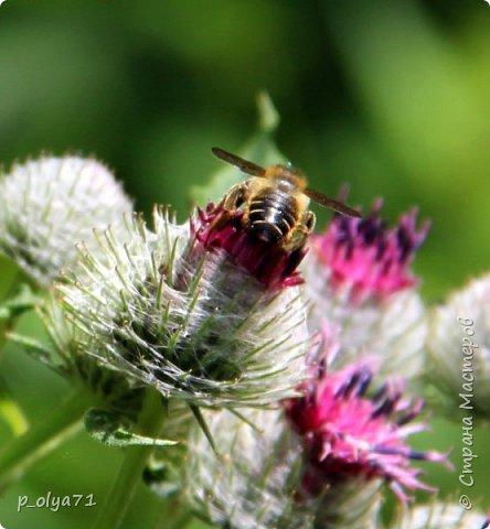 Здравствуйте,дорогие!!! В этом году лето очень радует! Тепло,даже жарко,бывает до +30,но и дождики временами проходят. И,по сравнению с прошлым летом,вижу очень много бабочек!!! Причём,разных,некоторых даже раньше не видела )) И везде(и на огороде,и на поле) много цветов... фото 30