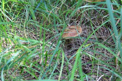 Здравствуйте,дорогие!!! В этом году лето очень радует! Тепло,даже жарко,бывает до +30,но и дождики временами проходят. И,по сравнению с прошлым летом,вижу очень много бабочек!!! Причём,разных,некоторых даже раньше не видела )) И везде(и на огороде,и на поле) много цветов... фото 64