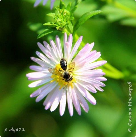 Здравствуйте,дорогие!!! В этом году лето очень радует! Тепло,даже жарко,бывает до +30,но и дождики временами проходят. И,по сравнению с прошлым летом,вижу очень много бабочек!!! Причём,разных,некоторых даже раньше не видела )) И везде(и на огороде,и на поле) много цветов... фото 95