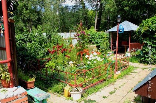 Здравствуйте,дорогие!!! В этом году лето очень радует! Тепло,даже жарко,бывает до +30,но и дождики временами проходят. И,по сравнению с прошлым летом,вижу очень много бабочек!!! Причём,разных,некоторых даже раньше не видела )) И везде(и на огороде,и на поле) много цветов... фото 102