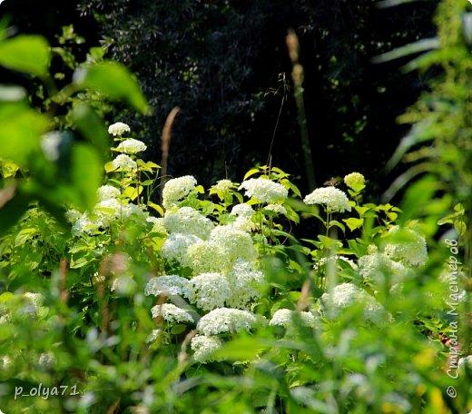 Здравствуйте,дорогие!!! В этом году лето очень радует! Тепло,даже жарко,бывает до +30,но и дождики временами проходят. И,по сравнению с прошлым летом,вижу очень много бабочек!!! Причём,разных,некоторых даже раньше не видела )) И везде(и на огороде,и на поле) много цветов... фото 68