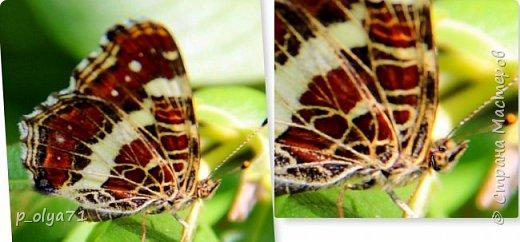 Здравствуйте,дорогие!!! В этом году лето очень радует! Тепло,даже жарко,бывает до +30,но и дождики временами проходят. И,по сравнению с прошлым летом,вижу очень много бабочек!!! Причём,разных,некоторых даже раньше не видела )) И везде(и на огороде,и на поле) много цветов... фото 71
