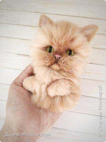 Хочу так же представить вашему вниманию валяные брошки) В первую очередь покажу котиков) Делала я их на заказ, по фото живых питомцев)